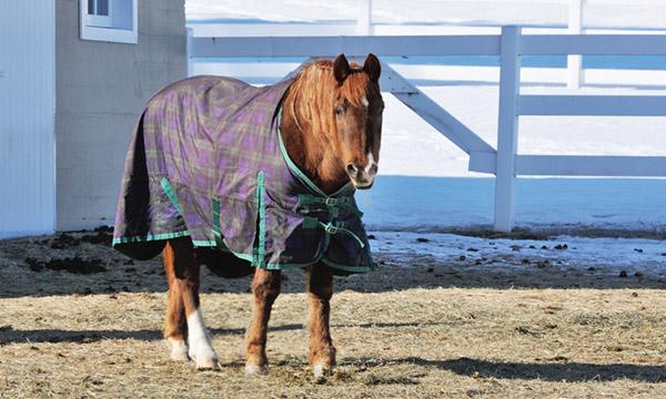 Reinigung Pferdedecken